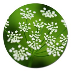 Queen Anne s Lace Magnet 5  (Round)