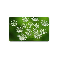 Queen Anne s Lace Magnet (name Card)