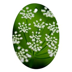 Queen Anne s Lace Oval Ornament (Two Sides)