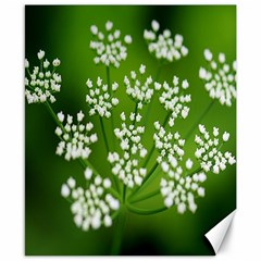 Queen Anne s Lace Canvas 8  x 10  (Unframed)