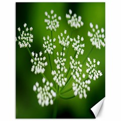 Queen Anne s Lace Canvas 12  x 16  (Unframed)