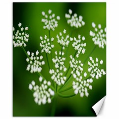 Queen Anne s Lace Canvas 16  X 20  (unframed)