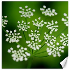 Queen Anne s Lace Canvas 20  X 20  (unframed)