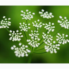 Queen Anne s Lace Canvas 20  x 24  (Unframed)