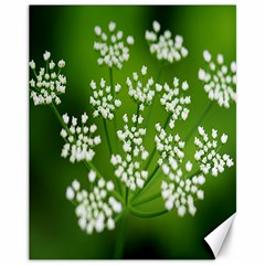 Queen Anne s Lace Canvas 11  x 14  (Unframed)