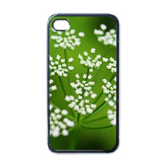 Queen Anne s Lace Apple iPhone 4 Case (Black)