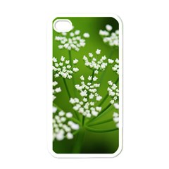 Queen Anne s Lace Apple iPhone 4 Case (White)