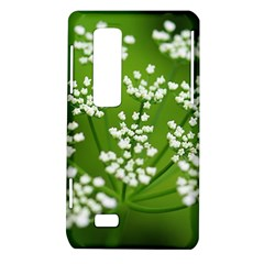 Queen Anne s Lace LG Optimus 3D P920 / Thrill 4G P925 Hardshell Case