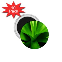Yucca Palm  1 75  Button Magnet (10 Pack)