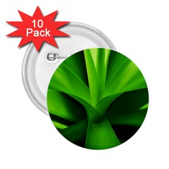 Yucca Palm  2 25  Button (10 Pack)