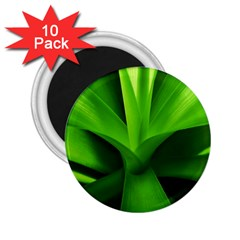 Yucca Palm  2.25  Button Magnet (10 pack)