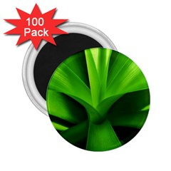 Yucca Palm  2.25  Button Magnet (100 pack)