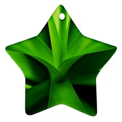 Yucca Palm  Star Ornament (Two Sides)