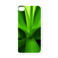 Yucca Palm  Apple iPhone 4 Case (White)