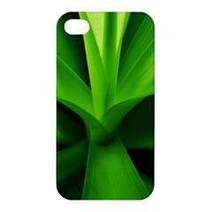 Yucca Palm  Apple Iphone 4/4s Hardshell Case