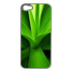 Yucca Palm  Apple iPhone 5 Case (Silver)