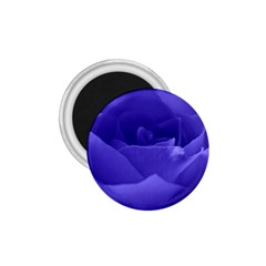 Rose 1.75  Button Magnet