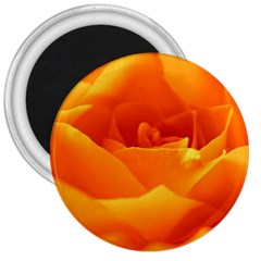 Rose 3  Button Magnet