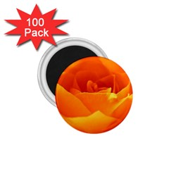 Rose 1.75  Button Magnet (100 pack)