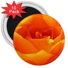 Rose 3  Button Magnet (10 pack)