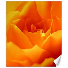 Rose Canvas 20  x 24  (Unframed)