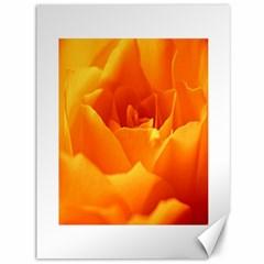 Rose Canvas 36  x 48  (Unframed)