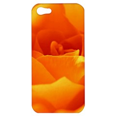 Rose Apple iPhone 5 Hardshell Case