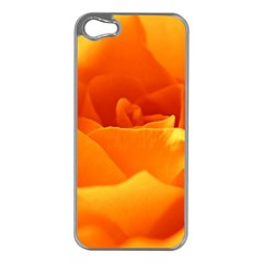 Rose Apple iPhone 5 Case (Silver)