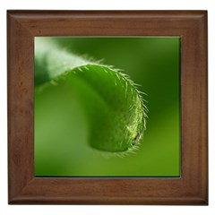 Leaf Framed Ceramic Tile