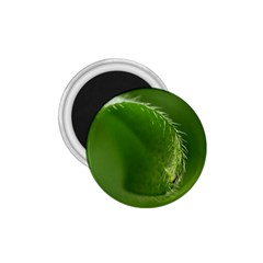 Leaf 1.75  Button Magnet