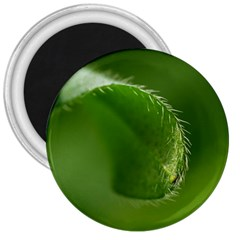 Leaf 3  Button Magnet