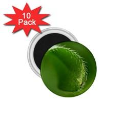 Leaf 1 75  Button Magnet (10 Pack)