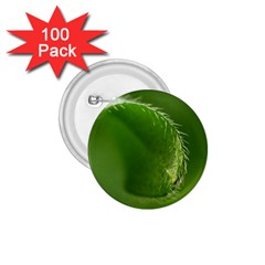 Leaf 1.75  Button (100 pack)