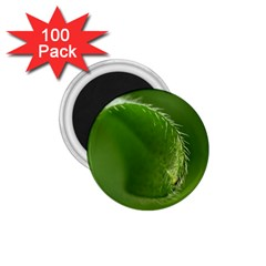 Leaf 1 75  Button Magnet (100 Pack)