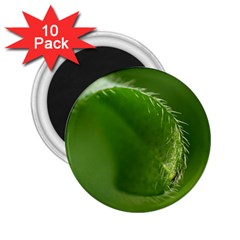 Leaf 2.25  Button Magnet (10 pack)