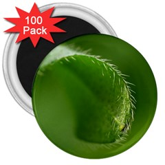 Leaf 3  Button Magnet (100 Pack)