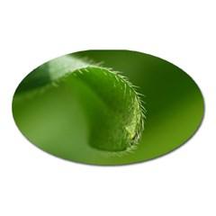 Leaf Magnet (Oval)