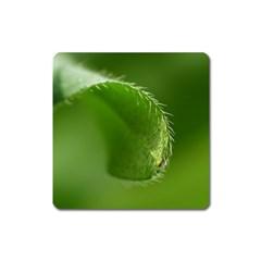 Leaf Magnet (Square)