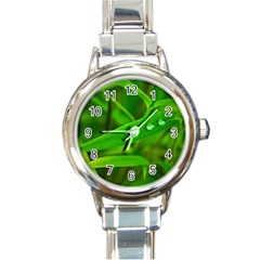Bamboo Leaf With Drops Round Italian Charm Watch