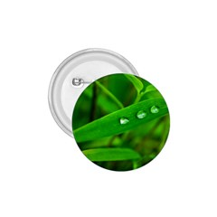 Bamboo Leaf With Drops 1 75  Button