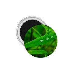 Bamboo Leaf With Drops 1.75  Button Magnet