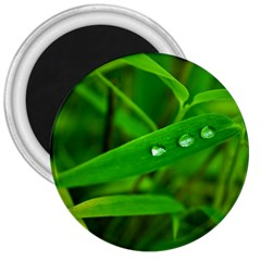Bamboo Leaf With Drops 3  Button Magnet