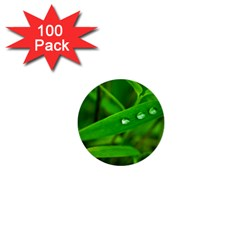 Bamboo Leaf With Drops 1  Mini Button (100 pack)