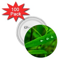 Bamboo Leaf With Drops 1 75  Button (100 Pack)