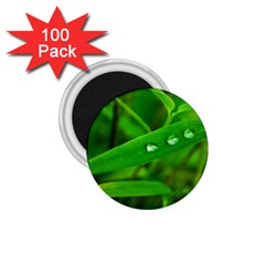 Bamboo Leaf With Drops 1.75  Button Magnet (100 pack)