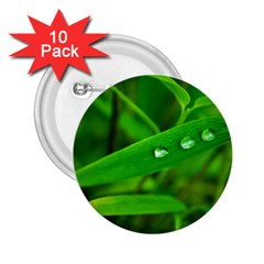 Bamboo Leaf With Drops 2.25  Button (10 pack)
