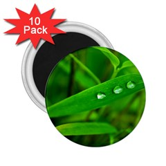 Bamboo Leaf With Drops 2.25  Button Magnet (10 pack)