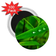 Bamboo Leaf With Drops 2.25  Button Magnet (100 pack)