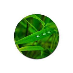 Bamboo Leaf With Drops Drink Coasters 4 Pack (Round)
