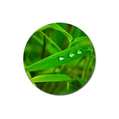 Bamboo Leaf With Drops Magnet 3  (Round)